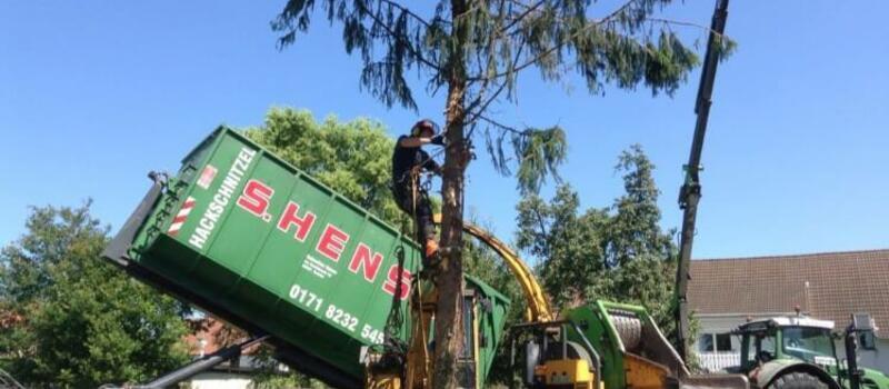 Referenzen Baumfällung
